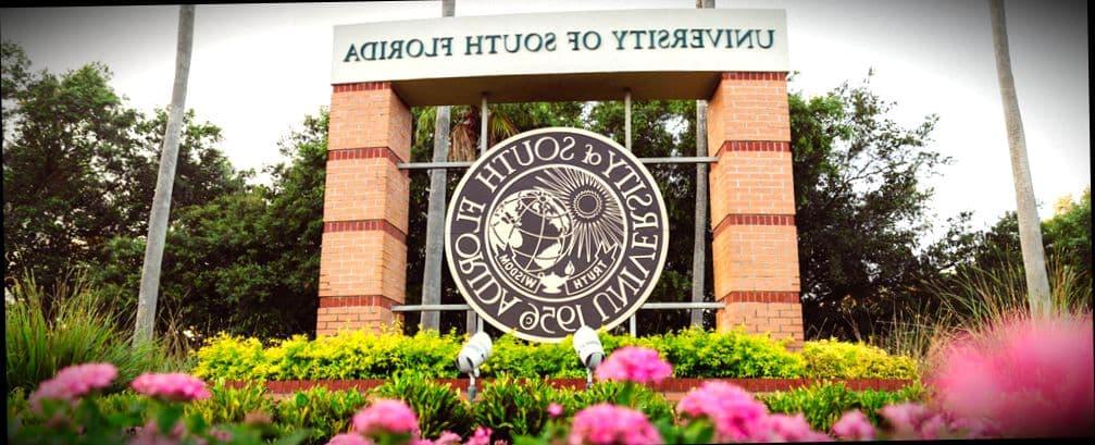 Вы можете получить второе высшее образование в University of South Florida (США)