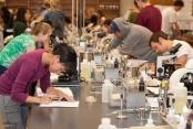 Into Oregon State Univercity. Программа получения высшего образования в США для молодёжи и взрослых от 16 лет фото