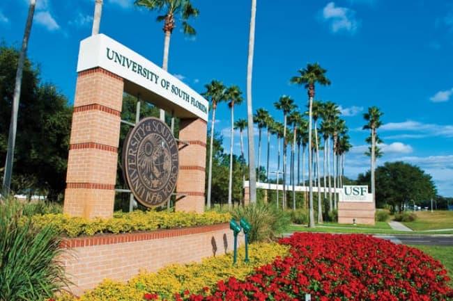 Подготовка к поступлению в University of South Florida