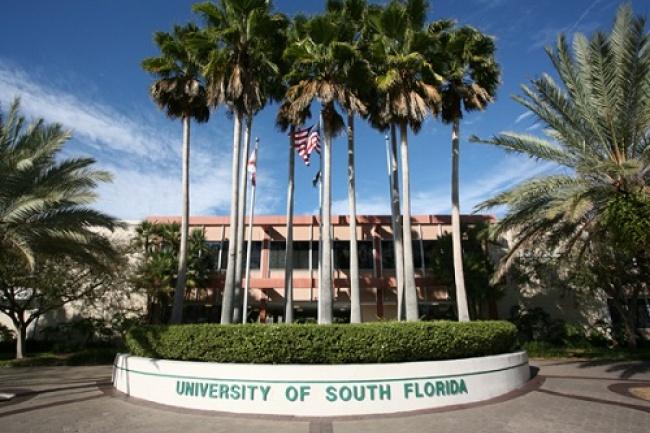 University of South Florida подготовка к поступлению